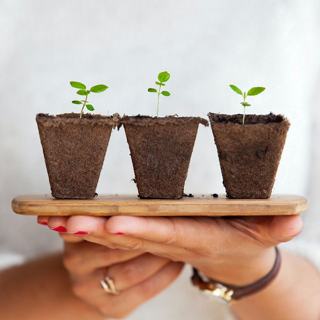 Le développement des énergies renouvelables pour les PME
